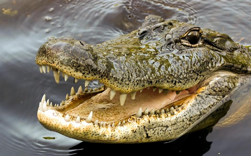 beware-of-smiling-crocodiles